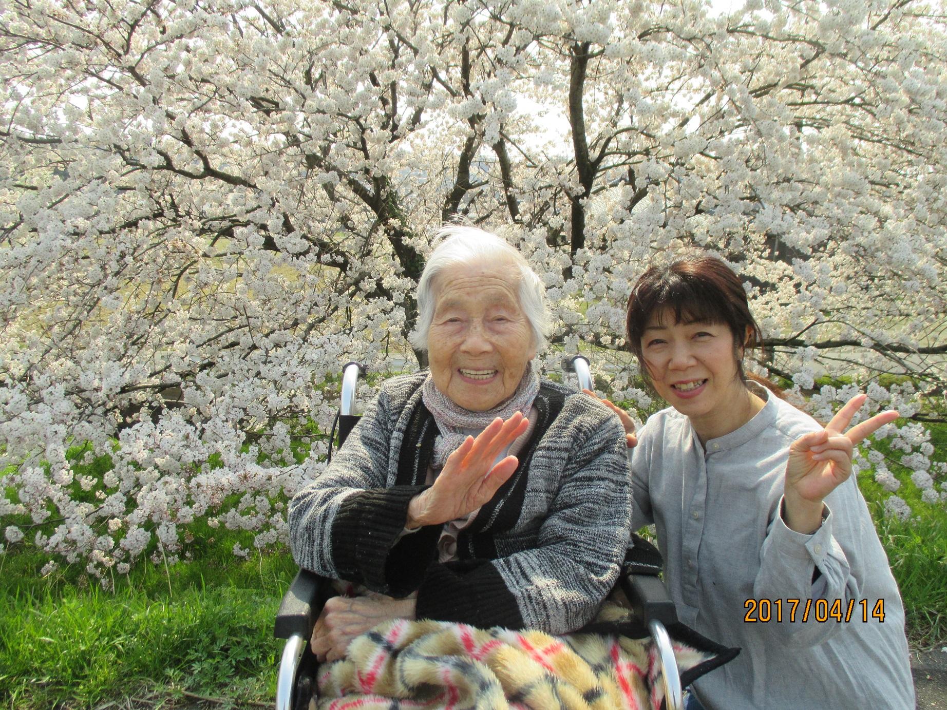 近所の桜並木【4月】